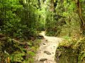 Caminho verde - Parque Estadual do Ibitipoca.JPG