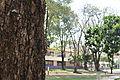 Camino hacia la Escuela DERECHO UPB.JPG