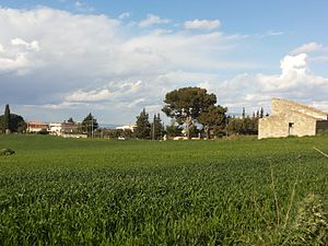 Alcamo - The countryside around Alcamo in spring