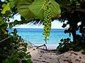 Campsite at Flamenco Beach, Culebra, Puerto Rico.jpg