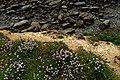Cap Gris-Nez - Côte d'Opale - View Down on the Edge.jpg