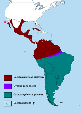 Caracara map.png