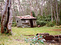Careys Peak Snow Gums & Crooked Shed.jpg