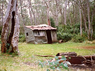 Careys Peak - campsite and the historic 1934 hut, with Snow Gums at Careys Peak
