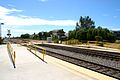 Carlsbad Poinsettia NCTD station12.jpg