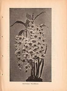 Catalogue (15892776463).jpg