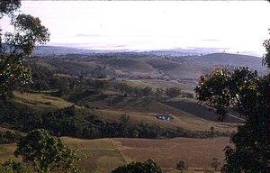 Hunter Valley cannabis infestation - Cessnock area, Hunter Valley