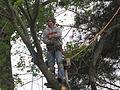 Chad Tree Experts tree trim.JPG