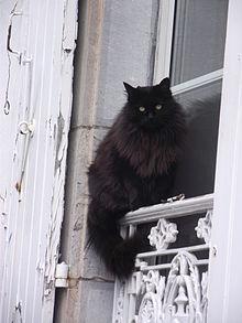grosse chate poilue fesses poilues