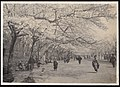 Cherry Blossom Time in Japan (1915 by Elstner Hilton).jpg