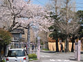 Cherry blossums at Jingu-Uji-Kosakusyo01.jpg