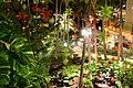 Christmas Lights in Motion (23833028696).jpg