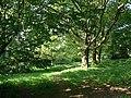 Clifton Grove - geograph.org.uk - 1336729.jpg