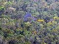 Cobá - Pyramide Xai-bé im Dschungel.jpg