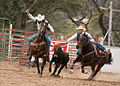 Cochise College Rodeo.jpg