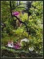 Colori e riflessi tra le fronde - panoramio.jpg