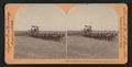 Combined reaper and thrasher, San Joaquin Valley, Cal., U.S.A, by Singley, B. L. (Benjamin Lloyd) 2.png