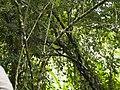 CostaRica (6108522069).jpg