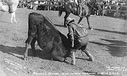 Cowboy Buffalo Vernon wrestling with steer's horns at the Round-Up, Pendleton, Oregon, 1910 (AL+CA 1828).jpg