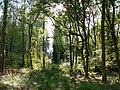 Creech Woods - geograph.org.uk - 1023779.jpg