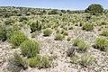 Crest Gardens - Flickr - aspidoscelis (3).jpg