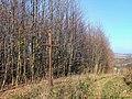 Dřevěný kříž u Sovince vedle lesní stezky (Q72849637).jpg