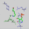 DAPDC Active Site.png