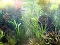 DSC26521, Monterey Bay Aquarium, California, USA (8150943305).jpg