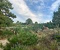 Deer at Ute Valley Park in Colorado Springs, Colorado (48743044018).jpg