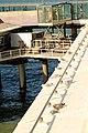 Den Haag - Scheveningse Pier (39129757794).jpg