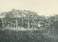 Deutsch-Ostafrika, Ostafrikanische Nutzpflanzen (Busse) - Tafel 41 - Chlorophora excelsa.jpg
