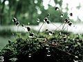 Dew drops rain.jpg