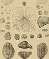 Die Versteinerungen des rheinischen Schichtensystems in Nassau. Mit einer kurzgefassten Geognosie dieses Gebietes und mit steter Berücksichtigung analoger Schichten anderer Lander (1850) (14781004661).jpg