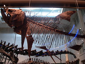 Carnegie Museum of Natural History - Image: Dinosaurs at CMNH 52