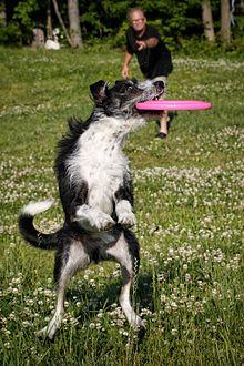 220px Disc_Dog disc dog wikipedia