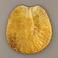 Disk Made of Two Sheets of Gold, One Concave the Other Decorated with Feathers or Palm Fronds MET 26.8.117bb EGDP013363.jpg
