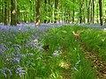 Dodsley Wood - geograph.org.uk - 808449.jpg