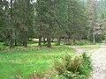 Dolina Suchej Wody, Psia Trawka.jpg