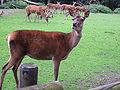 Dortmund-Zoo-IMG 5545-a.jpg
