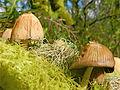 Down among the mushrooms (5636298468).jpg