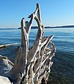 Driftwood on Fox Island.jpg