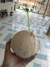 economic importance of coconut