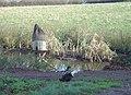 Duckpond at Windmill Farm - geograph.org.uk - 617032.jpg