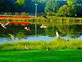 Ducks in Vilas Park - panoramio (3).jpg