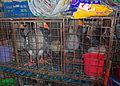 Ducks in cages at wet market, Shenzhen, China.jpg