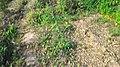 Dugariya, Madhya Pradesh 471101, India - panoramio (45).jpg