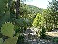 Echinocactus grusonii - panoramio.jpg