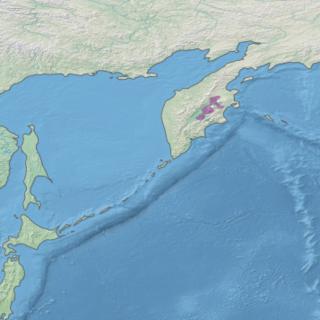Kamchatka–Kurile taiga