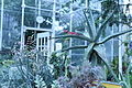 Edgerton Greenhouse Interior.JPG