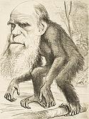 Editorial cartoon representando Charles Darwin como um macaco (1871) .jpg